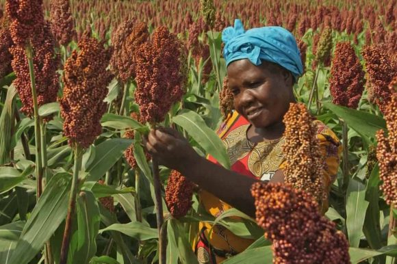 Land rights, not land grabs, can help Africa feed itself