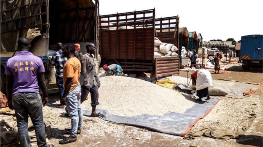 Maize saga: Lessons from Kenya's rejection of Uganda's maize